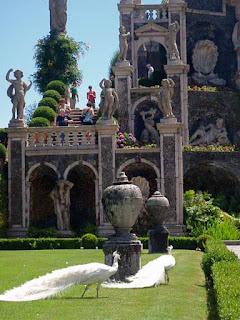 White Peacock Gardens Palazzo Barromeo Isola Bella Lake Maggiore Italy