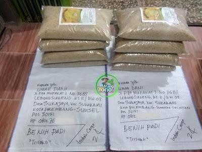 Benih Padi TRISAKTI Pesanan UMAR DANI Palembang, Sumsel  (Sebelum di Packing)