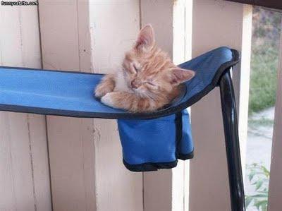 anak kucing tidur atas kerusi