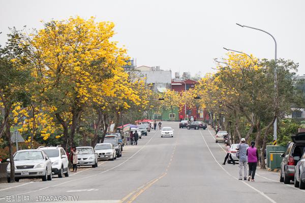 彰化芬園|2019芬園黃花風鈴木大道|全台最長黃金大道|寶藏寺旁