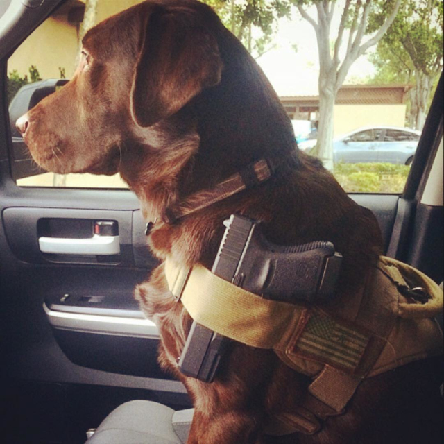 police dog is cooler than you..