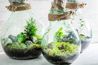 Terrarios en bombillas de luz reciclados