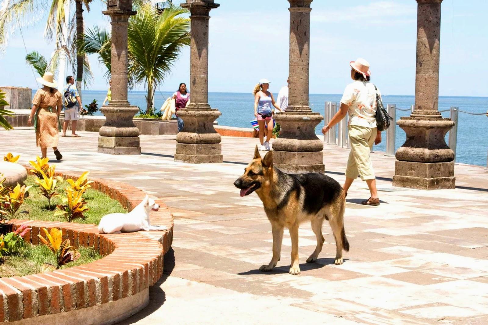 Beverly Hills Chihuahua 3 Ganzer Film Deutsch