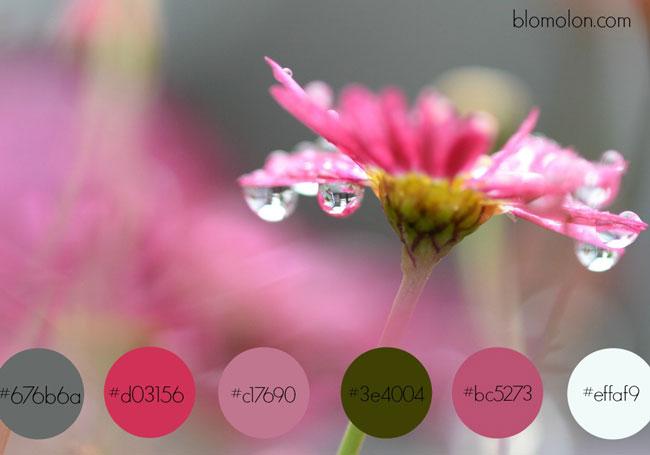 paleta-de-colores-3