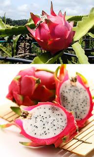 Pitaia ou Pitaya, também conhecida como Fruta do dragão ou Dragon-Fruit
