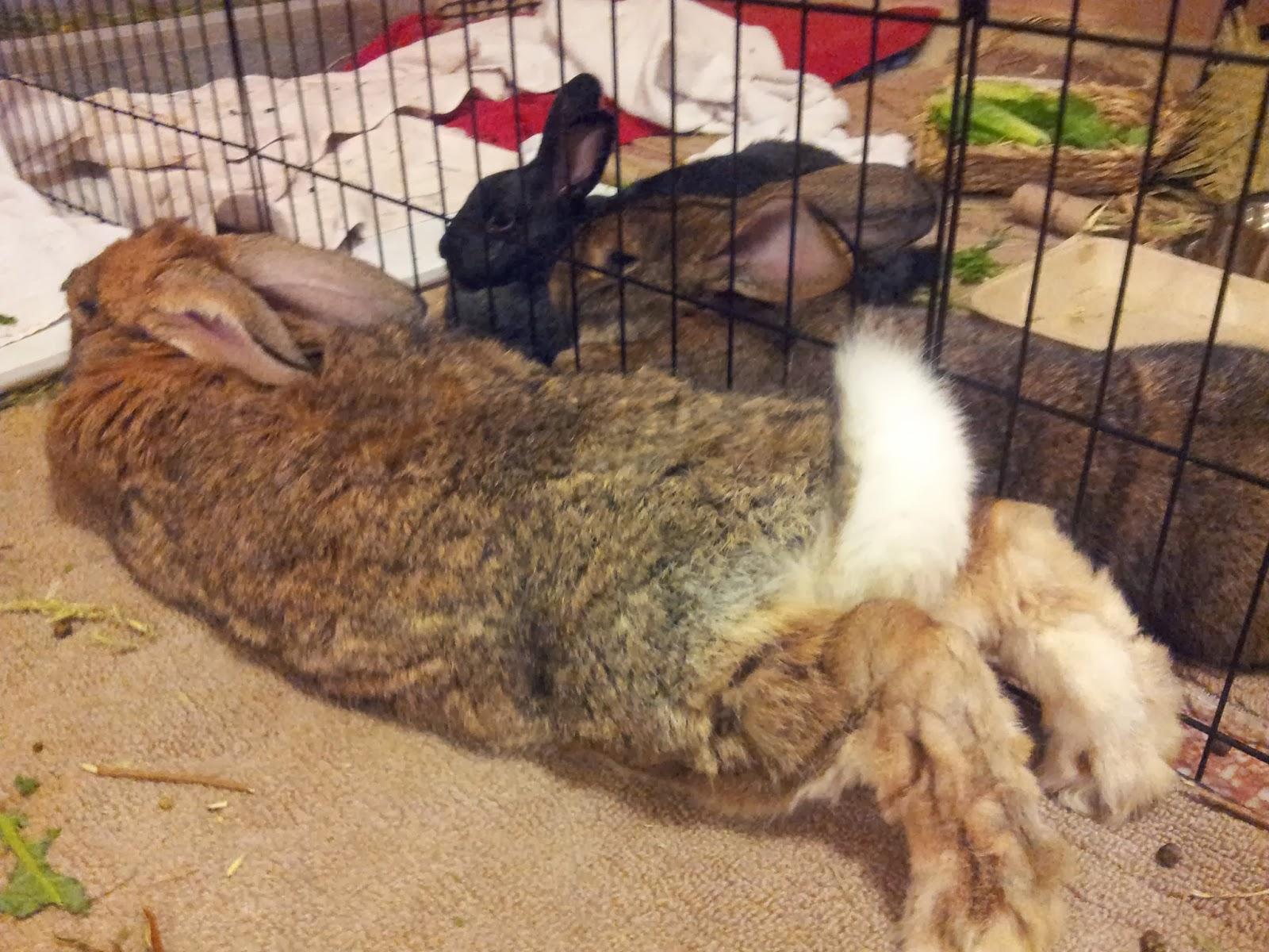Rabbit Air Minusa2 Review