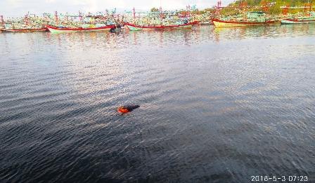 Mayat Pria Ditemukan Mengapung Diperaian Pulau Sarudik Sibolga