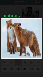 две лисицы на снегу, одна из них проявляет любовь к другой