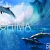 Enero 2017  Tour buscando los delfines en mochima