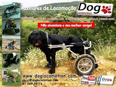 Dog Locomotion