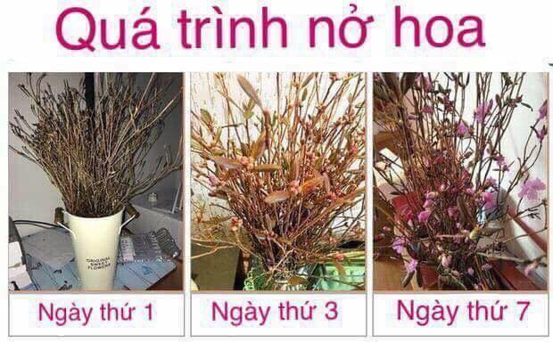 Cua hang hoa do quyen ngu dong o Thanh Tri