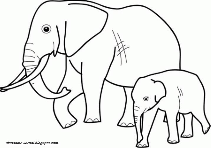 750 Koleksi Gambar Sketsa Hewan Gajah HD