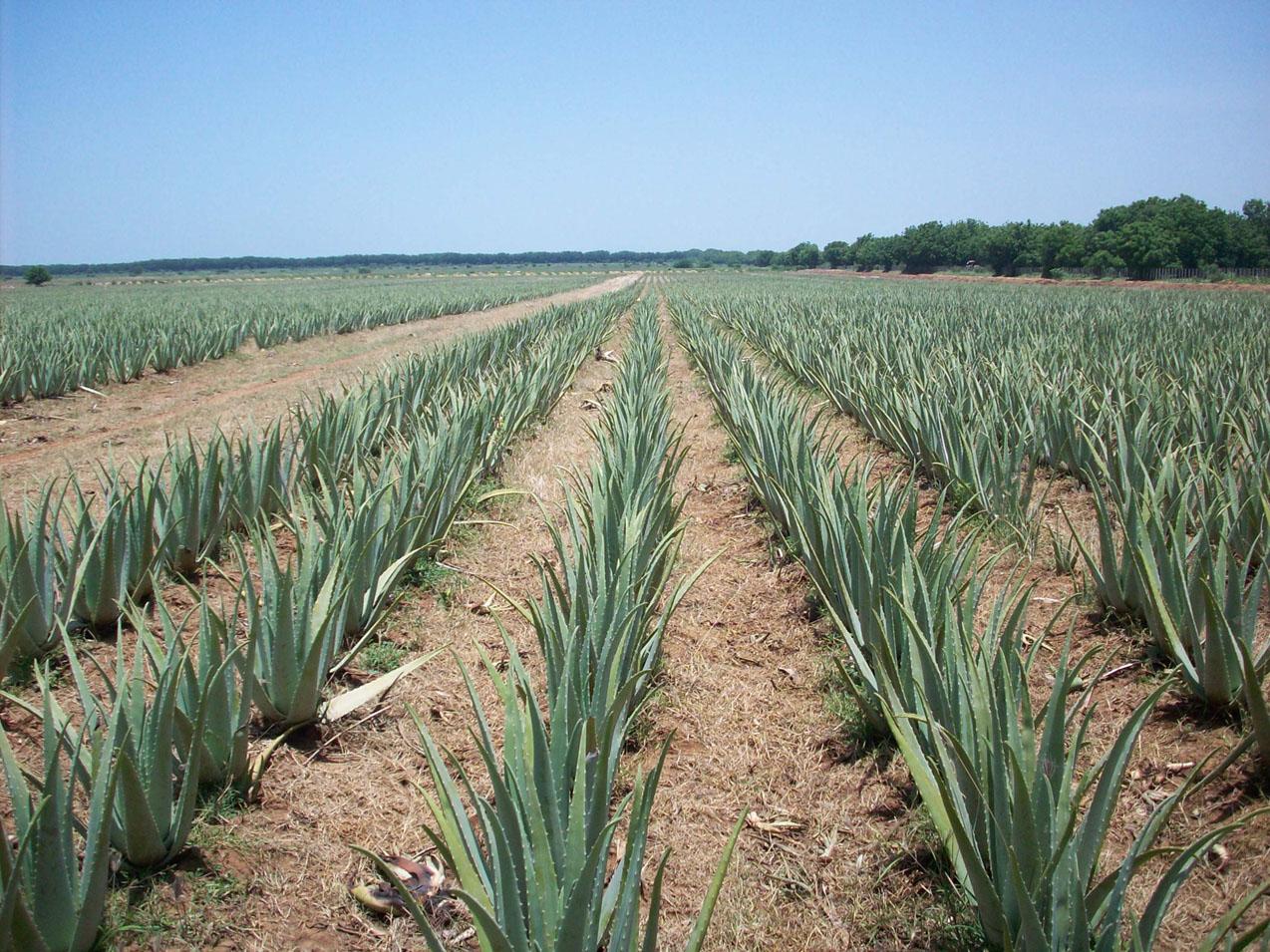 Forever Living Aloe Vera Nutrition Drinks Cosmetics