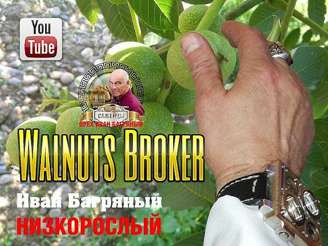 Какой сорта грецкого ореха самый лучшие в Украине?