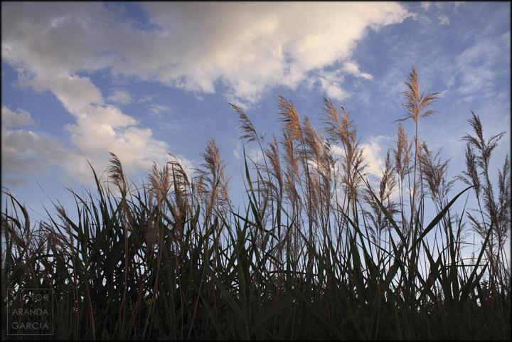 fotografia,naturaleza,murcia,paisaje,atardecer,cañas