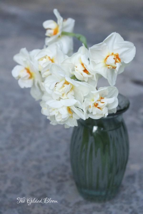 Sir Winston Churchill Daffodils- www.gildedbloom.com