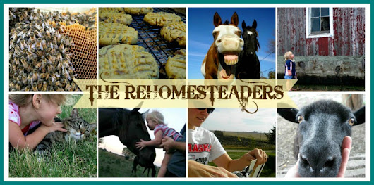 THE REHOMESTEADERS: The Rehomesteaders' 2014 Goals