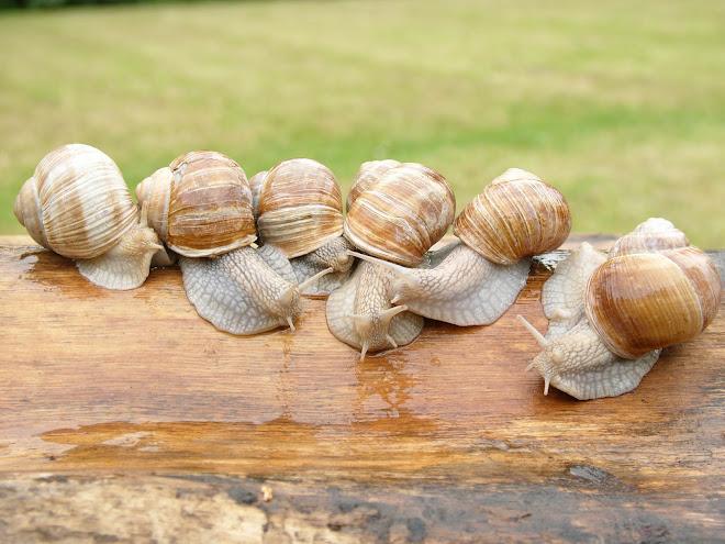 Préparer des escargots vivants