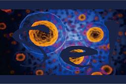 Pengertian Struktur dan Fungsi Sel Sebagai Unit Terkecil Kehidupan