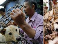 Yogyakarta Konsumsi Daging Anjing Lebih Besar Dibanding Jakarta, Diliput Media Internasional