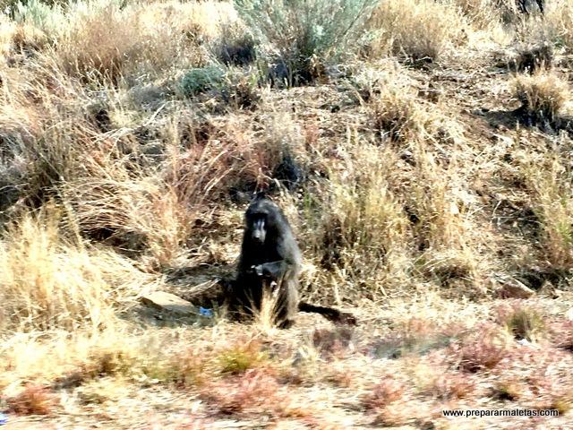 ver animales en Namibia incluso por la carretera