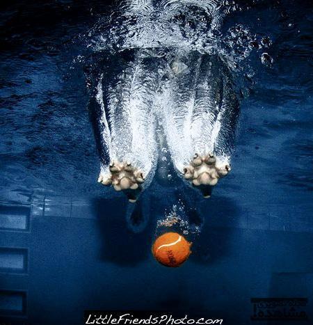 Amazing Underwater Dog Photography