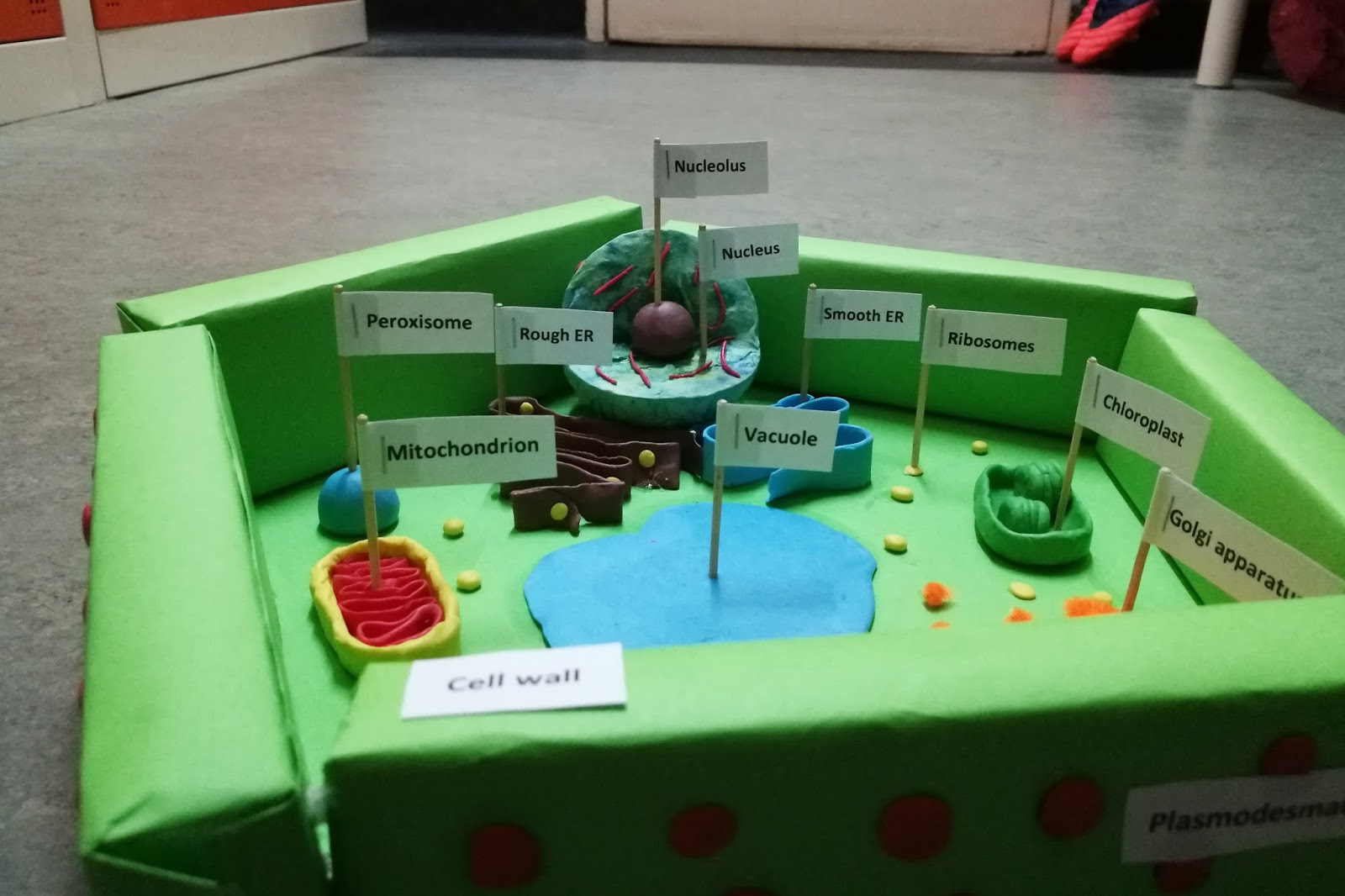 Diy plant cell model project amerzing here are some pictures of my plant cell model ccuart Choice Image