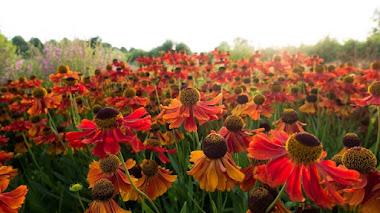 Primavera y verano del Jardín comunitario Vlinderhof en Utrecht