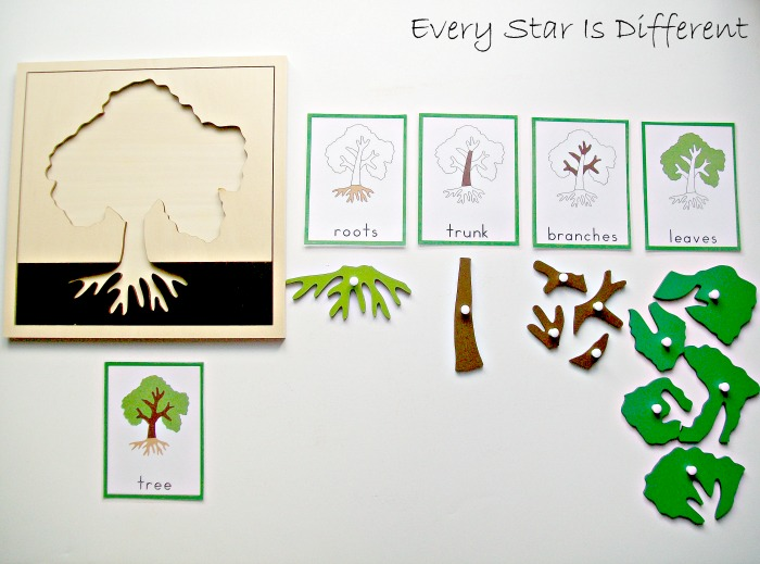 Parts Of A Tree Activity