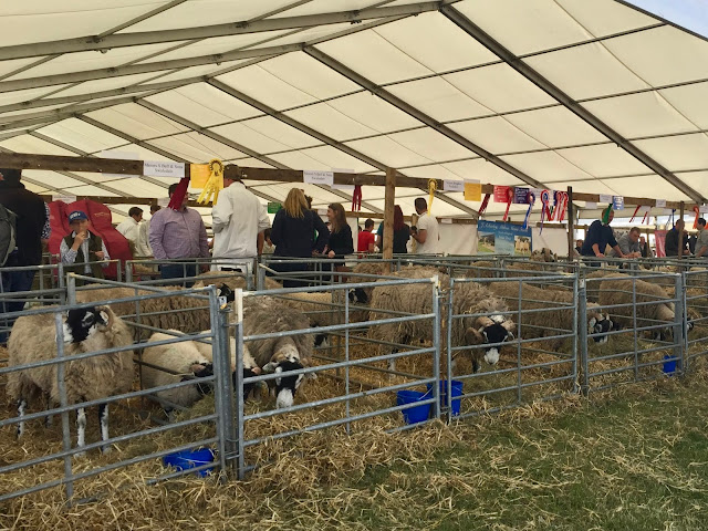Sheep tent at the Royal Highland Show, Edinburgh, Scotland