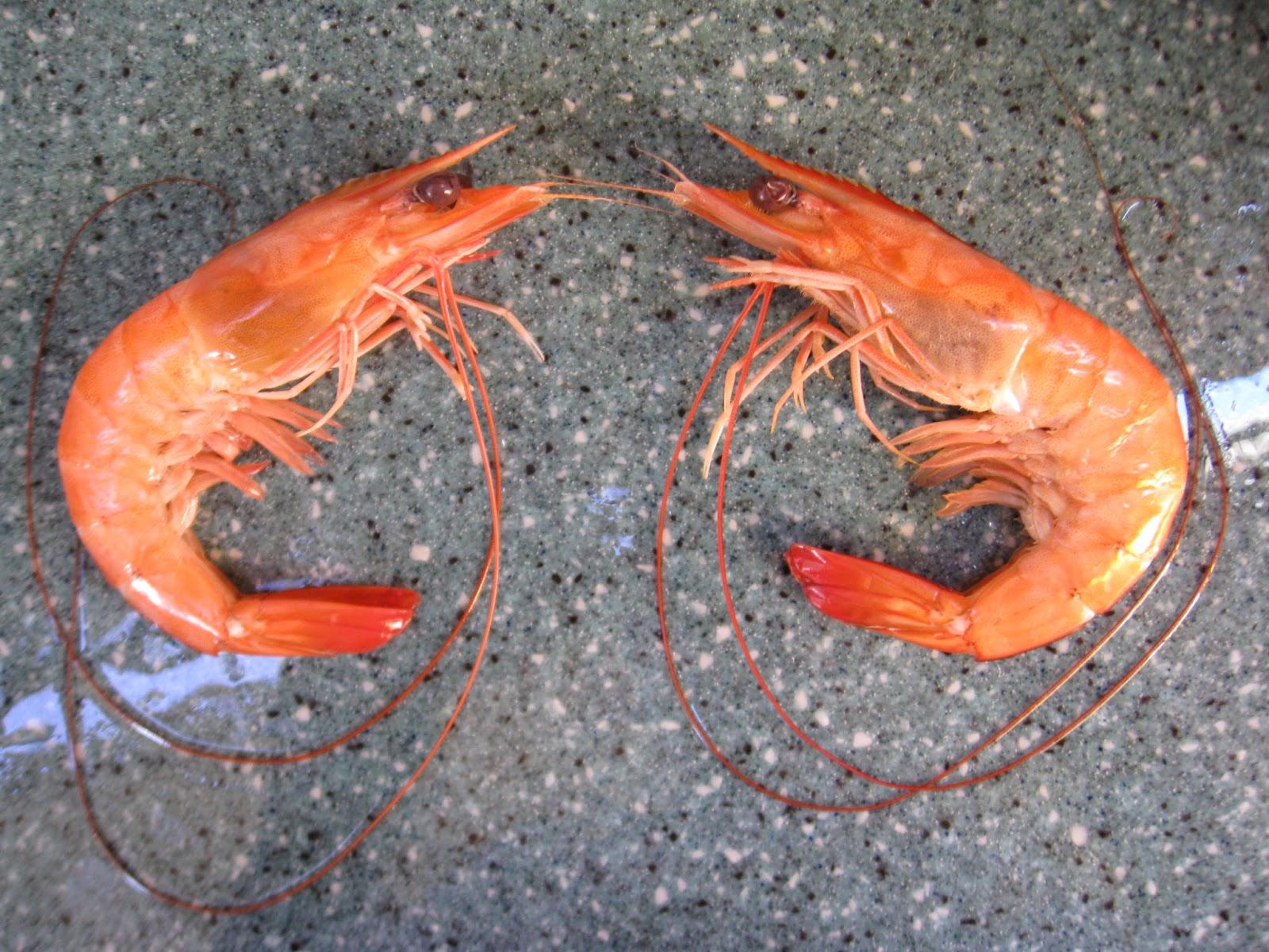 Cinnabarbarians: Moorea - A Visit To The Shrimp Farm