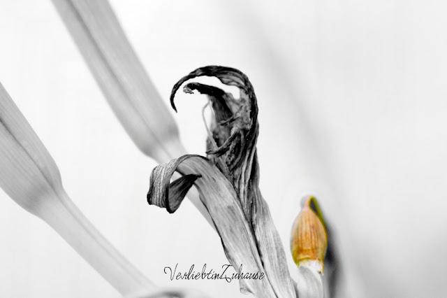 Taglilie -abstraktes Foto Bildbearbeitung S/W-Fokus