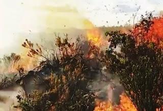 Incêndio atinge a Serra da Tromba