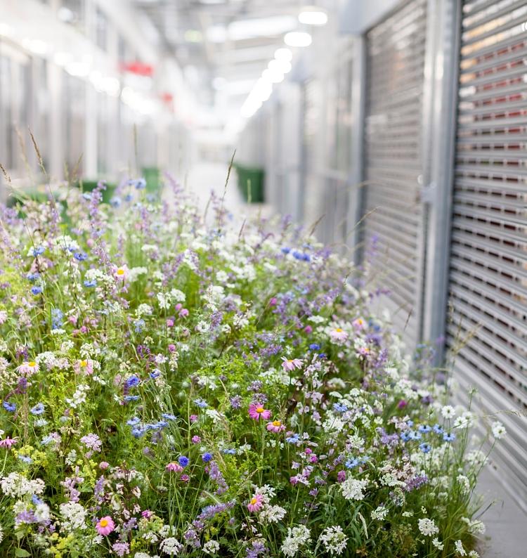 Arreglos florales con flores silvestres
