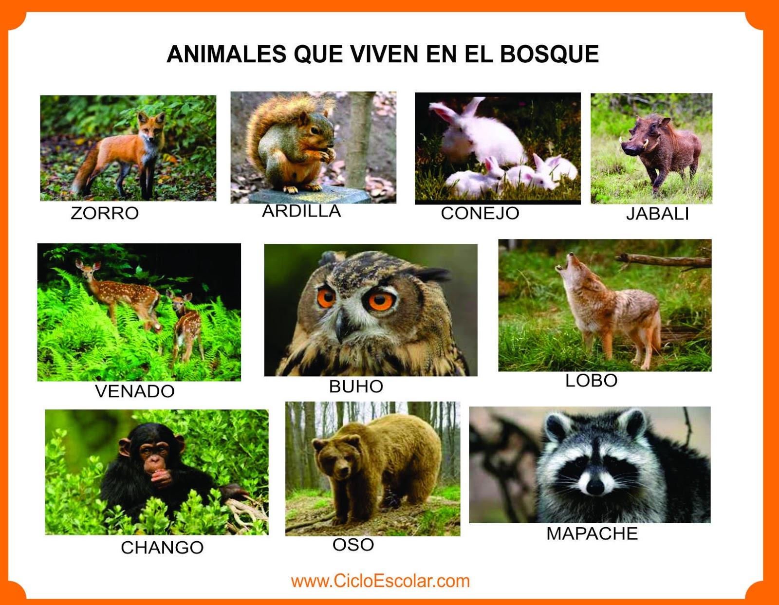 Animales Que Viven En El Bosque, Selva, Mar, Ríos