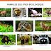 Animales que viven en el bosque, selva, mar, ríos, glaciares - Imágenes para recortar