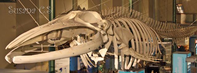 Museo Nacional de Ciencias Naturales - mncn