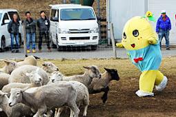ふなっしー羊を追い回す!