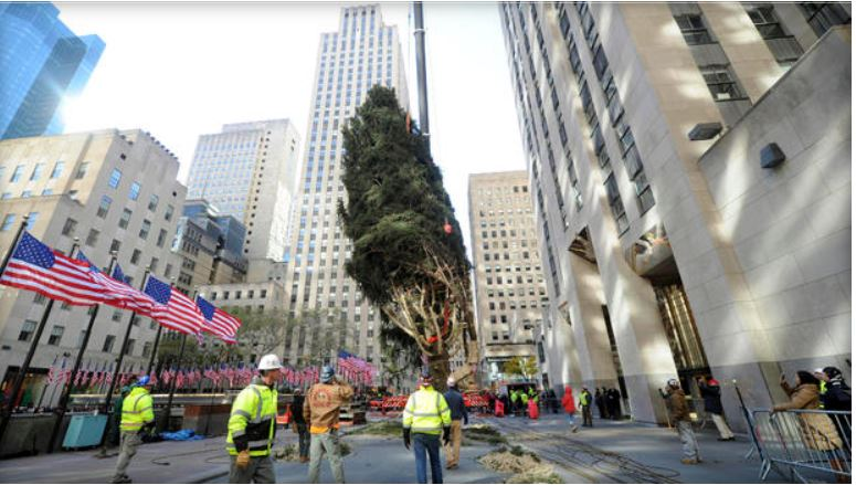 The 86th Rockefeller Center Christmas Tree Has Arrived
