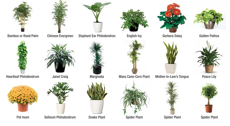 18 NASA Approved Air Purifying Houseplants - First Time ...