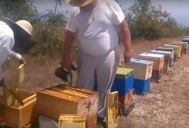 Τρύγος μελιού σε τριώροφο μελίσσι: Γέμισε δύο πατώματα μέλι!!! Μελισσοκομική τρέλα...