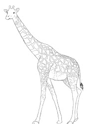 giraffe draw simple pattern tail pencil central complete point should much pretty course