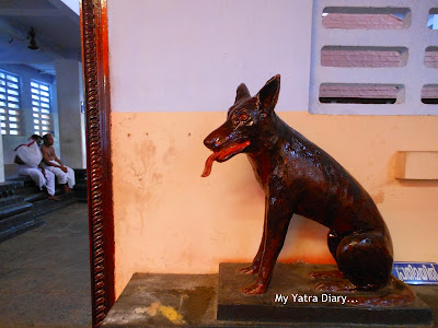 Dog at the Shree Muthappan Temple, Parassinikadavu, Kannur