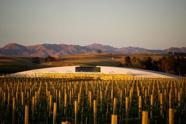 New Zealand wines Yealands