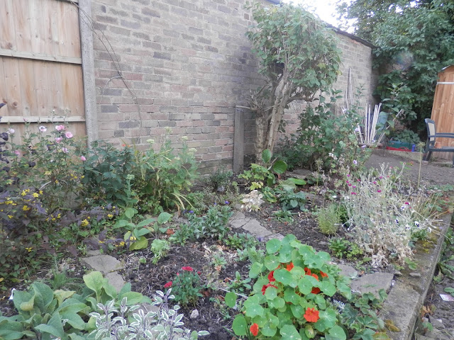 Diary of a suburban edible garden, July 2017. By UK garden blogger secondhandsusie.blogspot.com #permaculture #suburbanpermaculture #organicgarden #raisedbeds #growyourown #ukgardenblogger