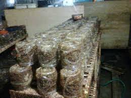 Ternak Kroto Menguntungkan Di Lahan Sempit