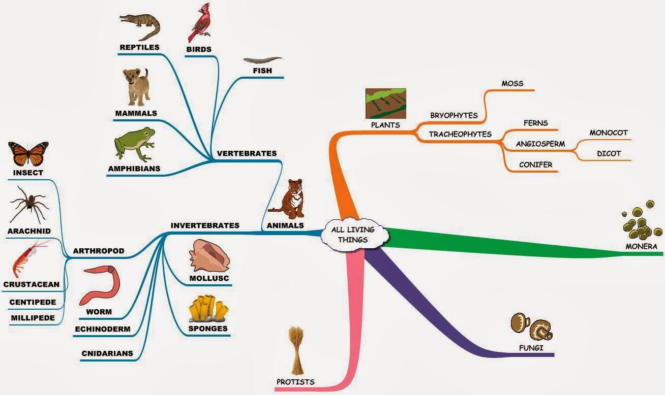 Biological Freak II: 問世間何謂「生命」?