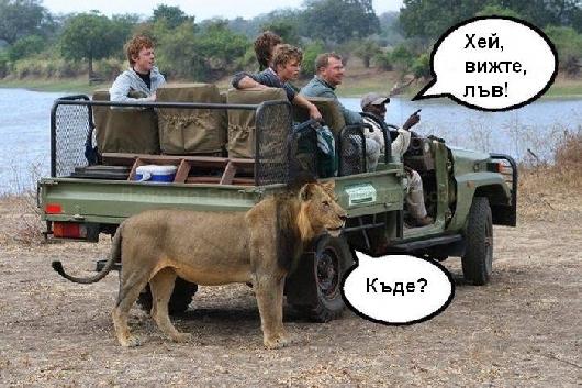 Вижте, лъв!