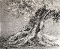 Charcoal drawing of a tree, Demo work created during an ART WORKSHOP at Mumbai, India