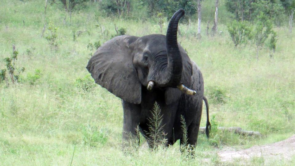 Tamil Quotes Wallpaper Download Zimbabwe Wildlife Animals Hd Desktop Wallpaper Collections